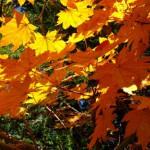 紅葉を観に行く前に観ておきたいNAVERまとめ6つ