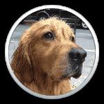 Mountain LionでGrowlを使っている人は必見!ほぼ完璧にGrowl通知を通知センターに流してくれる「Bark」