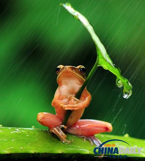 Frog umbrella 2