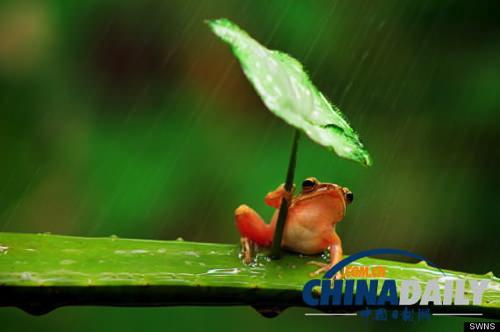 Frog umbrella 4