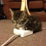 アップル純正のネコ用カイロ?アダプタで暖まるネコが可愛すぎると話題