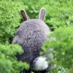 草むらでトトロを発見!信じるか信じないかはあなた次第です