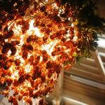 【閲覧注意】大阪で蝉の抜け殻で作ったシャンデリアの展示が開始