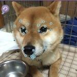 【衝撃画像】iPhoneアプリで犬にギャルメイクした画像が話題