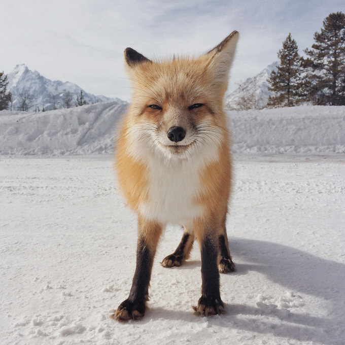 IPhone Photography Awards 2014 animal