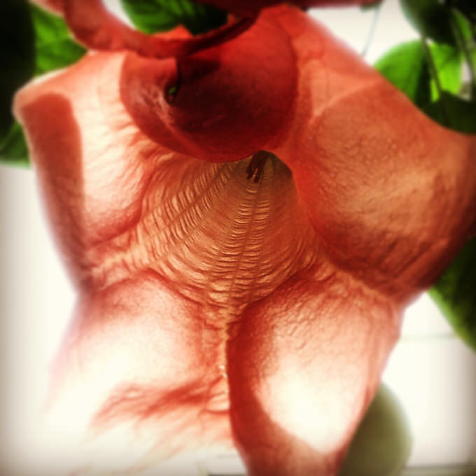 IPhone Photography Awards 2014 flower