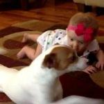 可愛い!赤ちゃんにハイハイを教える犬の動画が大人気!