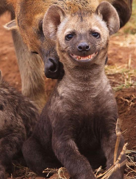 Smiling animals 12