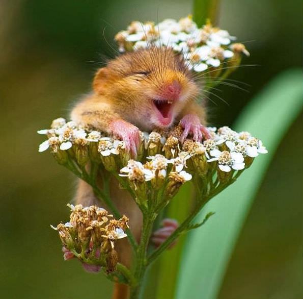 Smiling animals 24