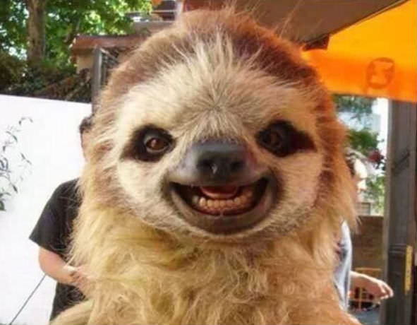 Smiling animals 3