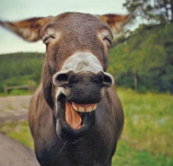 Smiling animals 8