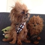 petco-star-wars-contest-1