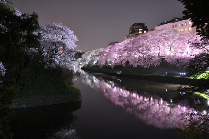 Twitter sakura chidorigahuchi