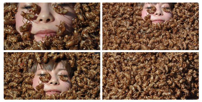毎年恒例グロ注意!今年は中川翔子さん1000匹のセミの抜け殻を浴びる