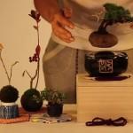 浮いてる!未来の盆栽「Air Bonsai」がキックスターターで資金調達達成!