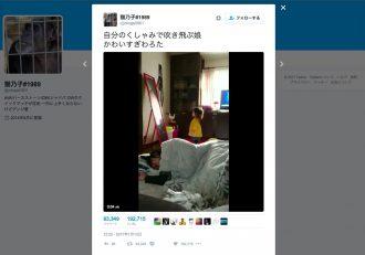 【可愛すぎ】「自分のくしゃみで吹き飛ぶ娘」の動画がTwitterで話題