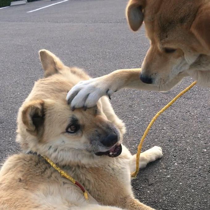 女子から共感の嵐!「仲良くない人から頭ぽんぽんされたときの女子」の表情を犬が再現