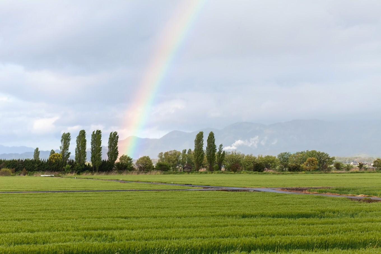 こんなの見たことない!「虹の端っこ」を収めた写真に反響殺到