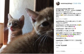 """石田ゆり子、インスタに""""ペット専用""""の新アカウント開設 「可愛すぎる」と大反響"""