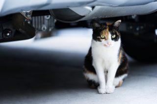 猫バンバンしてもボンネットの中に子猫がいた、JAF「強く叩くとビビリな猫はもっと奥に……」