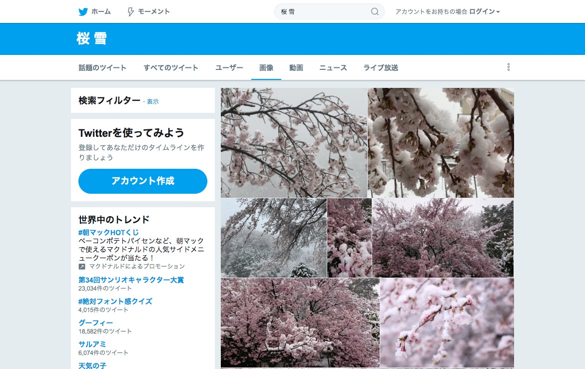 snow Cherry Blossoms