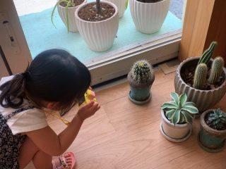 子ども用デジカメ「HappiCAMU」(ハピカム)をレビュー、2歳の娘が1日100枚撮影するほどハマった
