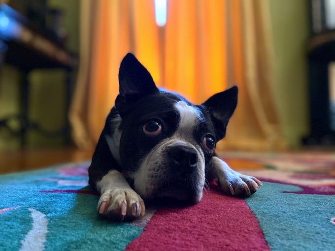Apple_iphone_11-dog-portrait-mode-091019